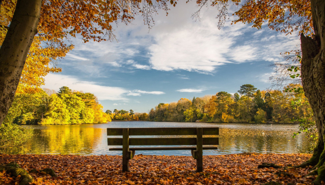 Photograph of a bench and landscape setting at Hartsholme Country Park