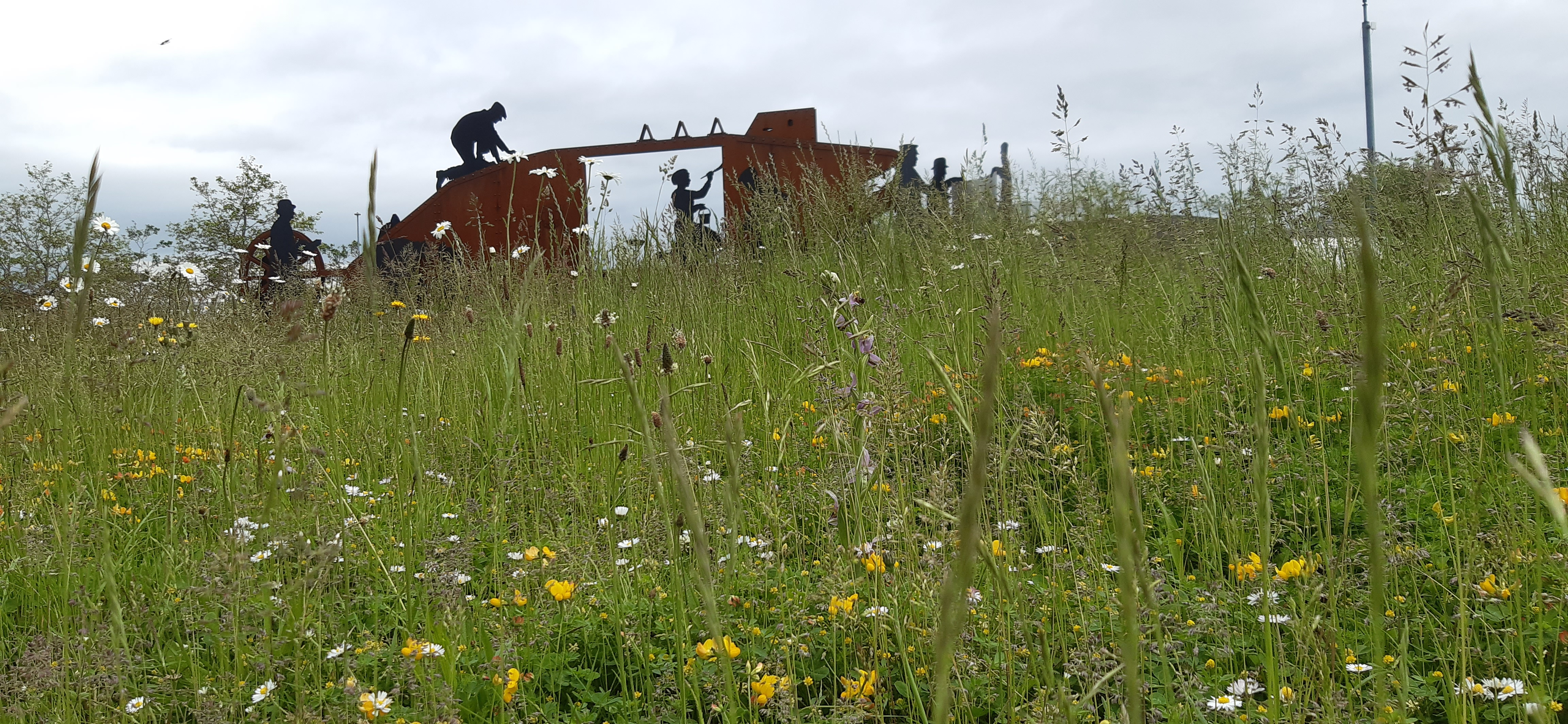 Rewilding flowers on roundabout